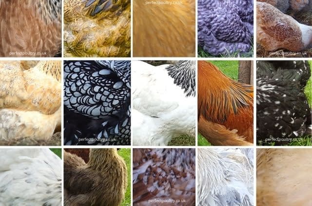 Feathers and their Markings